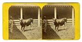 Alexander's Blooded Stock, Kentucky