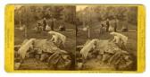 Polar Bears at Woodward's Gardens