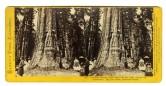 Mammoth Trees California