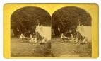 Camp Life, Lake George by Stoddard